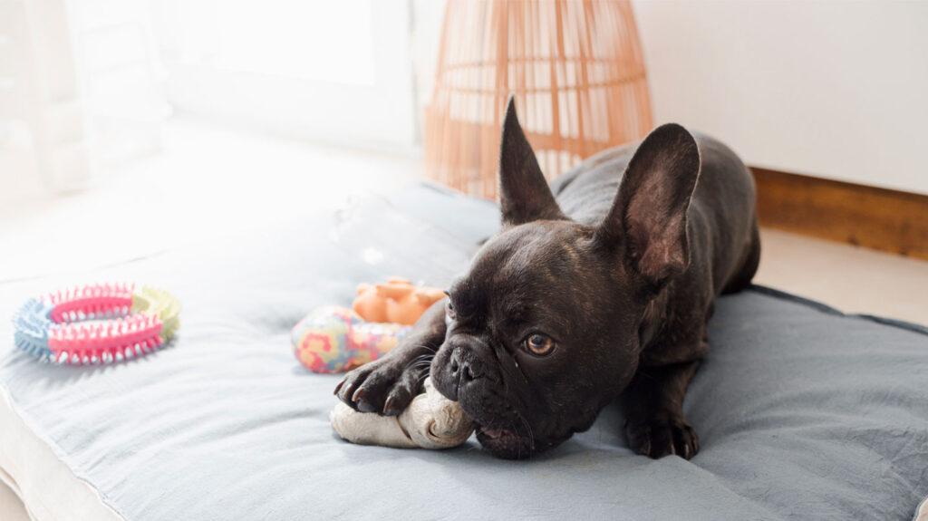 Tu mascota puede ayudarte a reducir el estrés